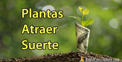 plantas-atraer-dinero-riqueza-prosperidad