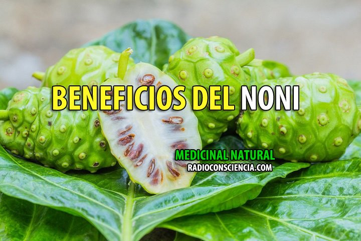 BENEFICIOS-NONI-MEDICINA-NATURISTA