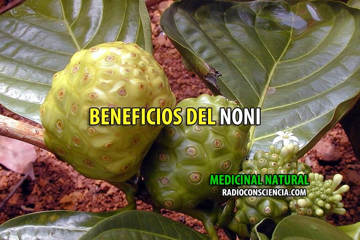 NONI-BENEFICIOS