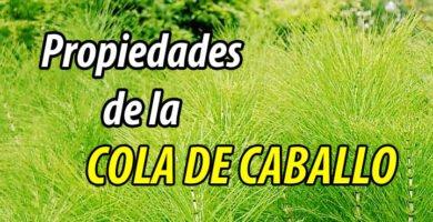 PROPIEDADES COLA DE CABALLO