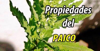 PROPIEDADES DEL PAICO
