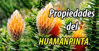 PROPIEDADES HUAMANPINTA