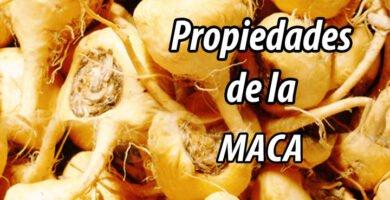 PROPIEDADES MACA