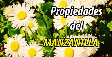 PROPIEDADES MANZANILLA