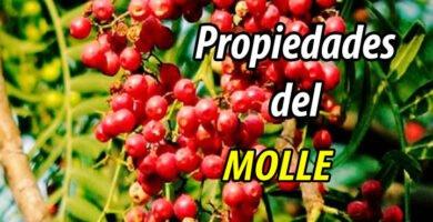 PROPIEDADES MOLLE