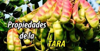 PROPIEDADES TARA
