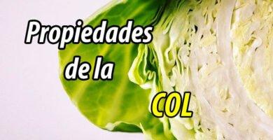 PROPIEDADES planta col