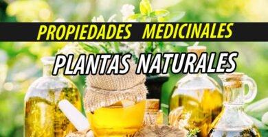 TRATAMIENTO NATURAL PLANTA NATURALES