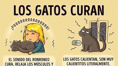 Beneficios Gatos