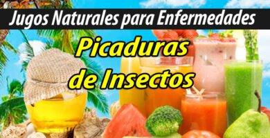 Jugoterapia JUGOS PARA Picaduras de Insectos