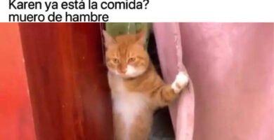 gente-toxica-meme-gato-dificil